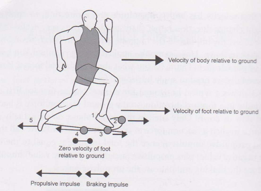 Foot Strike when running and Force Application how to run faster |  Pinoyathletics.info