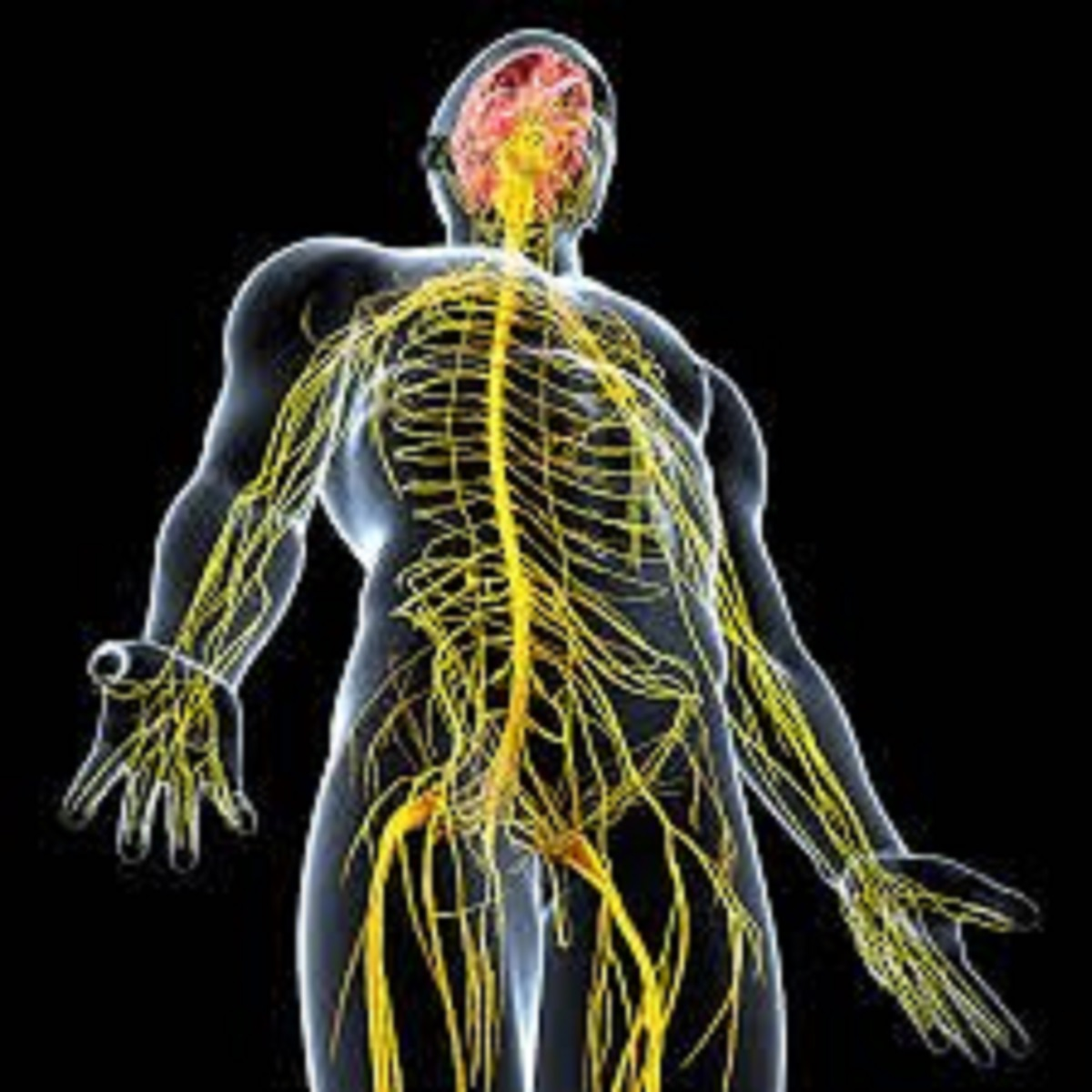Nervous System Training for Athletes 7